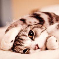 Esterilización gatos y perros