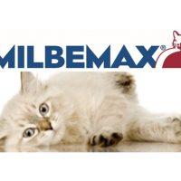Milbemax gato